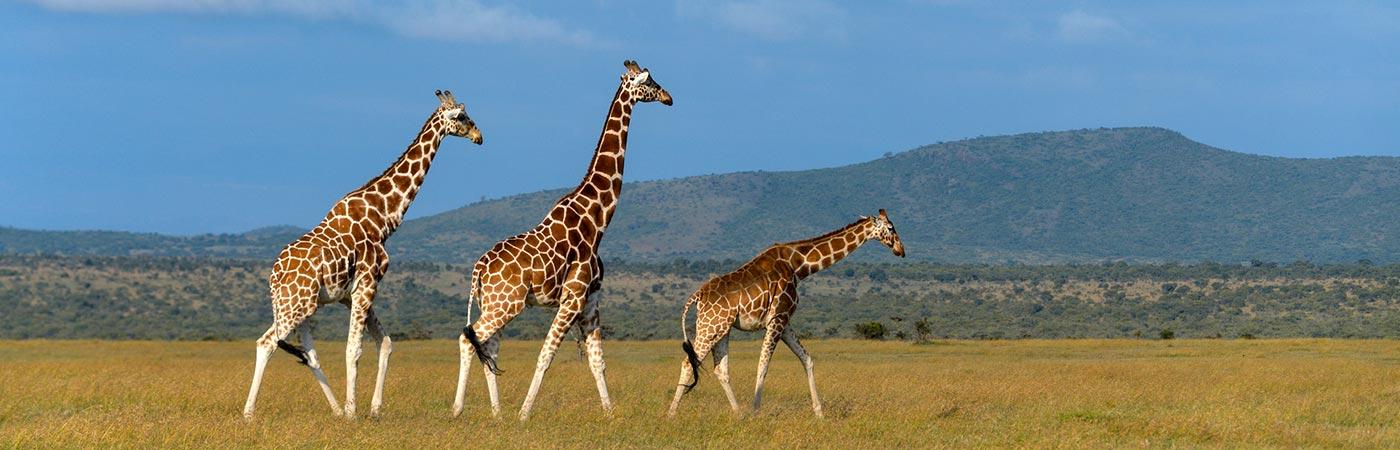 http://www.giraffarrah.eu/wp-content/uploads/2016/12/slide5.jpg